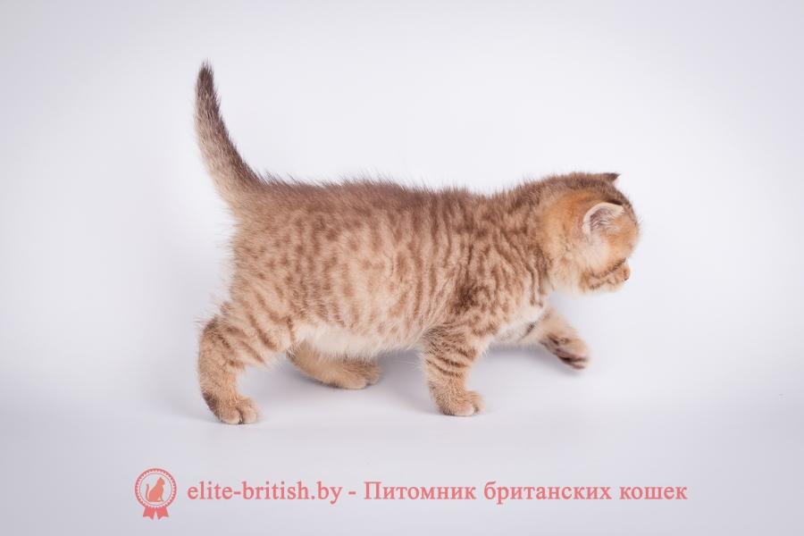 Витебск куплю кота