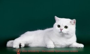 Иркутский Клуб Любителей Кошек Камея