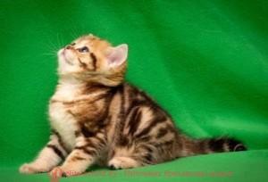 Имена котам на ф