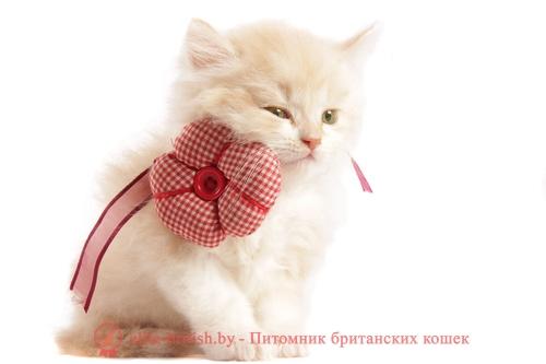 имена для котов, имя для мальчика кота, имена котов британцев, имя для британского кота, дать имя коту, имена для котов прикольные, красивые имена для котов, лучшие имена для котов, имена котам и кошкам, имена котов девочек, популярные имена котов, какое имя дать коту, имена для чёрных котов, популярные имена котов мальчиков, имя для рыжего кота, имена котов мальчиков русские, имена для британских котов мальчиков, имена котов из мультфильмов, самые популярные имена для котов, имена для котов мальчиков прикольные, русские имена для котов, английские имена котов, какие имена для котов, смешное имя для кота, имена котов белых, необычные имена для котов, имена котов мальчиков британцев, какое имя можно дать коту, список имен для котов, имя вислоухому коту, оригинальное имя для кота, имя для белого кота, самое лучшее имя для кота, самые красивые имена для котов, интересное имя для кота, самые прикольные имена для котов, как выбрать имя для кота, как назвать кота имена, имена котов мальчиков шотландцев, имя для невского маскарадного кота, имена для сиамских котов, классные имена для котов, имена для котов сфинксов, придумать имя коту, имена аниме котов, имена котов на букву д, шотландские имена для котов, красивые имена для котов мальчиков, имена для пушистых котов, египетские имена котов, каким именем назвать кота, имя для кота простое, модные имена для котов, имена серых котов, имена для котов британской породы, какое имя выбрать коту, имена котов воителей придуманные, имена для котов мальчиков рыжих, имена для котов полосатых, имя для белого кота мальчика, имя для кота шотландца, имя для кота мейн кун, мультяшные коты имена, имена котов на букву б, популярные имена котов британцев, имя для кота мальчика вислоухого, клички котов, клички котів, клички котов мальчиков, клички для котов британцев, красивые клички котов, клички для британского кота, популярные клички котов, клички котов белых, прикольные клички для котов, клички для чёрных котов, клички котов и кошек, смешн