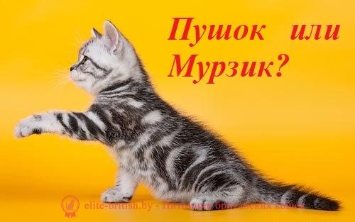 Прикольные имена для британских кошек девочек: необычные клички британок, как назвать британскую кошку девочку прикольно и со смыслом