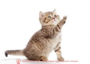Для котят своими руками фото