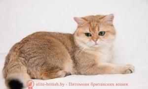 купить котенка шиншиллу купить британскую шиншиллу британская шиншилла купить в минске британские шиншиллы котята купить котята британской шиншиллы купить британская шиншилла цена продажа британских шиншилл питомники британских шиншилл питомники кошек шиншилла питомник британских кошек шиншилл питомники кошек британских серебристых шиншилл золотые британские котята купить питомник золотой котенок британские котята британские коты британский кот фото британских британские котята фото маленькие котята домашние кошки британский кот фото белые котята белый котенок рыжие котята породистые котята голубые котята котенок голубой милые котята короткошерстные котята добрые котята глаза котенка окрасы котят британская окрасы британская голубая британский голубой красивые котята британская порода британские короткошерстные котята британская шиншилла пушистые котята симпатичные котята забавные котята уход за котом британский черный британский короткошерстный кот плюшевые котята серый котенок британские котята окрас окрас британских котят котёнок шиншилла британская порода кошек кошки британской породы большие котята британская короткошерстная фото британская лиловая британские голубые коты британский голубой кот британские мраморные окрасы британских кошек домашние котята домашний котёнок британские голубые котята голубой британский котенок голубые британские котята мраморный котенок британская голубая кошка коты британской породы кошки британский голубой смешные кошки и котята красивые котята картинки смотреть картинки котят британская голубая фото фото британской голубой милые котята фото самые смешные котята британский плюшевый британский шоколадный британцы фото котята коты и котята смешные окрасы британских котов британский серебристый британский серебристый чёрно белые котята черно белый котенок фотографии котят голубой котенок фото голубые котята фото дымчатые котята шоколадный котенок котики британские смешные кошки и коты и котята бесплатные картинки котят картинки котя