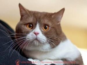 котенок британские котята британские коты британский кот фото британских британские котята фото маленькие котята домашние кошки британский кот фото белые котята белый котенок рыжие котята породистые котята голубые котята котенок голубой милые котята короткошерстные котята добрые котята глаза котенка окрасы котят британская окрасы британская голубая британский голубой красивые котята британская порода британские короткошерстные котята британская шиншилла пушистые котята симпатичные котята забавные котята уход за котом британский черный британский короткошерстный кот плюшевые котята серый котенок британские котята окрас окрас британских котят котёнок шиншилла британская порода кошек кошки британской породы большие котята британская короткошерстная фото британская лиловая британские голубые коты британский голубой кот британские мраморные окрасы британских кошек домашние котята домашний котёнок британские голубые котята голубой британский котенок голубые британские котята мраморный котенок британская голубая кошка коты британской породы кошки британский голубой смешные кошки и котята красивые котята картинки смотреть картинки котят британская голубая фото фото британской голубой милые котята фото самые смешные котята британский плюшевый британский шоколадный британцы фото котята коты и котята смешные окрасы британских котов британский серебристый британский серебристый чёрно белые котята черно белый котенок фотографии котят голубой котенок фото голубые котята фото дымчатые котята шоколадный котенок котики британские смешные кошки и коты и котята бесплатные картинки котят картинки котята бесплатно лиловые котята британская белая британские кошки и коты котёнок в доме уход за британскими котятами британские плюшевые котята плюшевые британские котята завести котенка котенок британской породы порода британские котята рыжий британский картинки смешные котята фото кошек и котят фото красивых котят британский мраморный котенок мраморные британские котята черный котенок фото б