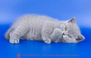 британские котята, британский кот, британская кошка, британец кот, британцы, котята британцы, британец порода кошки, коты породы британец, кошки британской породы, коты британской породы, британцы кошки, котенок британской породы, котики британцы, котята от британской кошки, котенки британцы, кошечки британцы, котята британского кота, британская кошка и кот, кошки котята британцы, британцы коты и кошки, британские котята видео, британские кошки видео, коты британцы видео, видео котята британцы, кошки британцы видео, кошка британская короткошерстная видео, британская порода кошек видео, британские коты видео смотреть, британцы видео, британские коты видео, продажа плюшевых британских котят, британские плюшевые котята цена, британец плюшевый, британский плюшевый кот, плюшевый британец фото, британские плюшевые котята фото, британская плюшевая кошка фото, британский плюшевый кот фото, британец плюшевый, британский плюшевый кот, кот британец плюшевый, британские кошки плюшевые, котята британские плюшевые голубые, когда британские котята становятся плюшевыми, плюшевые вислоухие британцы, голубой плюшевый британец, котята британцы вислоухие плюшевые, котята британцы плюшевые, британские плюшевые котята, британские котята, британский породистый кот, британские котята видео ютуб, британские котята фото, британская кошка фото, британский кот фото, британец кот фото, британцы котята фото, британская короткошерстная кошка фото, британский короткошерстный кот фото, кошки британцы фото, котята британские короткошерстные фото, фото котов британской породы, фото кошек порода британская, коты породы британец фото, коты британцы фото цены, котик британец фото, британец короткошерстный фото, котята британской породы фото, британские коты фотографии, фото британских кошек смотреть, фото британских котят и кошек, взрослые британские коты фото, британский гладкошерстный кот фото, британские котята маленькие фото, взрослые коты британцы фото, фото маленьких котят британцев, фотографии бр