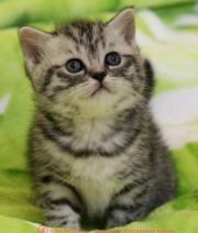 серый котенок британский серебристый британский серебристый британская шиншилла серебристая британская мрамор на серебре котята мрамор на серебре серенький котенок британские серебристые котята серебристые британские котята британская черный мрамор на серебре фото котят серых британские котята серые котята серого цвета британские котята мрамор на серебре котенок серебристая шиншилла серый британский кот серые британские кошки британские кошки серебристые котята серого цвета серый котенок серый британский кот хорошие котята кошки и котята предыдущие пометы британских кошек британских котов британских котят британцев выпускники котенок вискас купить британские котята вискас купить британские котята окрас вискас купить британский вискас британские котята вискас британские котята вискас котята окрас вискас котенок вискас порода котята вискас фото британская окрас вискас британский кот вискас британский кот вискас британский вискас фото британский котенок окрас вискас фото британских котят вискас фото британских котят окрас вискас