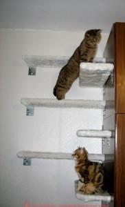 Как сделать домик для кошки своими руками комплексы для кошек своими руками сделать кошке домик своими руками комплекс для кота своими руками игровой комплекс коту своими руками домик для котёнка своими руками домик для кота своими руками как сделать когтеточку для кота сделать когтеточку для кошки когтеточка для кошек своими руками делаем домик для кошки домик для кошки мастер класс делаем домик для кота чертежи игрового комплекса для кошек сделать самой домик для кошки чертежи домиков для котов схемы домиков для кошек материалы для домика кошки самодельная когтеточка для кота самодельный домик для кота домик для кошки своими руками выкройка домика для кота домики для кошек из дерева самодельные когтеточки для кошек ткань для домика кошки игровые комплексы для кошек изготовление комплексов для кошек как построить коту домик как сделать когтеточку для котенка как смастерить домик для кошки когтеточки для котов своими руками когтеточка для котят своими руками