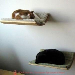 Выкройка домика для кошки из поролона фото 112