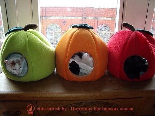 Лежаки для кошек своими руками мастер