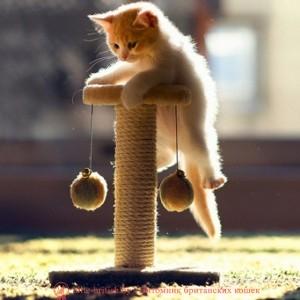 как приучить к когтеточке, как приучить котенка к когтеточке, как приучить кота к когтеточке, как приучить кошку к когтеточке, пропитка для когтеточки, спрей для когтеточки, приучение котенка к когтеточке, чем пропитывают когтеточки для кошек, как научить котенка, как приучить взрослого кота, как приучить кота к лежанке, как приучить кошку к домику, как приучить кота к домику, rfr ghbexbnm r rjuntnjxrt, rfr ghbexbnm rjntyrf r rjuntnjxrt