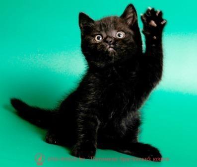 Купить кота в минске цены