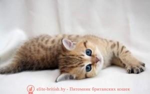 котенок 2 месяца, британский котенок 2 месяца, котёнок 2 месяца фото, котята шотландские 2 месяца, вислоухие котята 2 месяца, котята британцы 2 месяца, вислоухие шотландские котята 2 месяца, британские котята 2 месяца фото, шотландский котенок 2 месяца фото котята британцы фото 2 месяца, черный котенок 2 месяца, размер котенка в 2 месяца, поведение котят в 2 месяца, котята 2 месяца развитие уход сибирские котята 2 месяца фото, как воспитывать котенка 2 месяца, развитие котят по неделям,рост котят по неделям, как определить сколько недель котенку, развитие котенка по неделям фото, как узнать сколько недель котенку, сколько месяцев котенку, котенок до скольки месяцев, развитие котенка по месяцам, размер котят по месяцам, котята от рождения до месяца, взяли котенка 1 месяц, вислоухие котята 1 месяц фото, вислоухие котята 1 месяц фото, rjntyjr 2 vtczwf,,hbnfycrbq rjntyjr 2 vtczwf, rjntyjr 2 vtczwf ajnj, rjnznf ijnkfylcrbt 2 vtczwf, dbckje[bt rjnznf 2 vtczwf, rjnznf,hbnfyws 2 vtczwf, котёнок 2.5 месяца, котенок 2.5 месяца фото