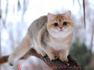 котенок 5 месяцев, котенок 5 месяцев фото, британский котенок в 5 месяцев, шотландский котенок 5 месяцев, британский котенок 5 месяцев фото, развитие котят по неделям,рост котят по неделям, как определить сколько недель котенку, развитие котенка по неделям фото, как узнать сколько недель котенку, сколько месяцев котенку, котенок до скольки месяцев, развитие котенка по месяцам, размер котят по месяцам, rjntyjr 5 vtczwtd, rjntyjr 5 vtczwtd ajnj, ,hbnfycrbq rjntyjr d 5 vtczwtd