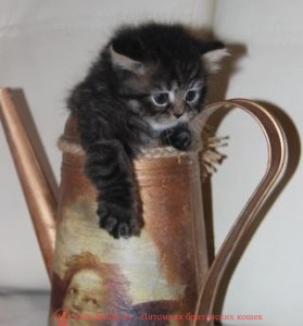 котенок 1.5 месяца, британский котенок 1.5 месяца, котята британцы 1.5 месяца, котята 1.5 месяца фото, британский котенок 1.5 месяца фото, шотландские вислоухие котята 1 месяц, котята в возрасте 1 месяц, британские котята 1 месяц фото, котенок мейн кун 1 месяц, вислоухие котята 1 месяц фото, сколько спит котенок 1 месяц, шотландские котята 1 месяц фото, котята британцы 1 месяц фото, поведение котенка в 1 месяц, где спать котенку 1 месяц, котенку месяц, котенок 1 месяц, котята в месяц фото, как выглядят котята в месяц, котята 1 месяц фото, британские котята фото по месяцам, британские котята 1 месяц, вислоухие котята 1 месяц, шотландские котята 1 месяц, развитие котят по неделям,рост котят по неделям, как определить сколько недель котенку, развитие котенка по неделям фото, как узнать сколько недель котенку, сколько месяцев котенку, котенок до скольки месяцев, развитие котенка по месяцам, размер котят по месяцам, котята от рождения до месяца, взяли котенка 1 месяц, вислоухие котята 1 месяц фото, вислоухие котята 1 месяц фото, котенок 4 недели, rjntyre 4 ytltkb, rjntyre vtczw, rjntyjr 1 vtczw, rjnznf d vtczw ajnj, rfr dsukzlzn rjnznf d vtczw, rjnznf 1 vtczw ajnj,,hbnfycrbt rjnznf ajnj gj vtczwfv, rjntyjr 1.5 vtczwf