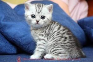 шотландские вислоухие котята 1 месяц, котята в возрасте 1 месяц, британские котята 1 месяц фото, котенок мейн кун 1 месяц, вислоухие котята 1 месяц фото, сколько спит котенок 1 месяц, шотландские котята 1 месяц фото, котята британцы 1 месяц фото, поведение котенка в 1 месяц, где спать котенку 1 месяц, котенку месяц, котенок 1 месяц, котята в месяц фото, как выглядят котята в месяц, котята 1 месяц фото, британские котята фото по месяцам, британские котята 1 месяц, вислоухие котята 1 месяц, шотландские котята 1 месяц, развитие котят по неделям,рост котят по неделям, как определить сколько недель котенку, развитие котенка по неделям фото, как узнать сколько недель котенку, сколько месяцев котенку, котенок до скольки месяцев, развитие котенка по месяцам, размер котят по месяцам, котята от рождения до месяца, взяли котенка 1 месяц, вислоухие котята 1 месяц фото, вислоухие котята 1 месяц фото, котенок 4 недели, rjntyre 4 ytltkb, rjntyre vtczw, rjntyjr 1 vtczw, rjnznf d vtczw ajnj, rfr dsukzlzn rjnznf d vtczw, rjnznf 1 vtczw ajnj, ,hbnfycrbt rjnznf ajnj gj vtczwfv