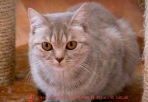 котенок 9 месяцев, развитие котенка по неделям фото, как узнать сколько недель котенку, сколько месяцев котенку, котенок до скольки месяцев, развитие котенка по месяцам, размер котят по месяцам, rjnznf 8 vtczwtd