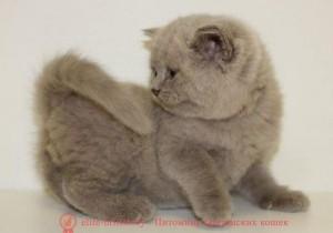 котенок 1.5 месяца, британский котенок 1.5 месяца, котята британцы 1.5 месяца, котята 1.5 месяца фото, британский котенок 1.5 месяца фото, шотландские вислоухие котята 1 месяц, котята в возрасте 1 месяц, британские котята 1 месяц фото, котенок мейн кун 1 месяц, вислоухие котята 1 месяц фото, сколько спит котенок 1 месяц, шотландские котята 1 месяц фото, котята британцы 1 месяц фото, поведение котенка в 1 месяц, где спать котенку 1 месяц, котенку месяц, котенок 1 месяц, котята в месяц фото, как выглядят котята в месяц, котята 1 месяц фото, британские котята фото по месяцам, британские котята 1 месяц, вислоухие котята 1 месяц, шотландские котята 1 месяц, развитие котят по неделям,рост котят по неделям, как определить сколько недель котенку, развитие котенка по неделям фото, как узнать сколько недель котенку, сколько месяцев котенку, котенок до скольки месяцев, развитие котенка по месяцам, размер котят по месяцам, котята от рождения до месяца, взяли котенка 1 месяц, вислоухие котята 1 месяц фото, вислоухие котята 1 месяц фото, котенок 4 недели, rjntyre 4 ytltkb, rjntyre vtczw, rjntyjr 1 vtczw, rjnznf d vtczw ajnj, rfr dsukzlzn rjnznf d vtczw, rjnznf 1 vtczw ajnj, ,hbnfycrbt rjnznf ajnj gj vtczwfv, rjntyjr 1.5 vtczwf