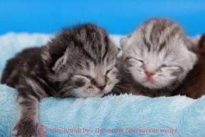 котята 1 неделя, котята 1 неделя фото, котенок неделя, развитие котят по неделям, рост котят по неделям, как определить сколько недель котенку, развитие котенка по неделям фото, как узнать сколько недель котенку, rjntyjr ytltkz, rjnznf 1 ytltkz, rjntyjr ytltkz, hfpdbnbt rjnzn gj ytltkzv