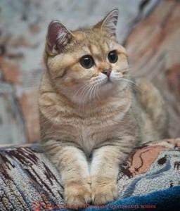 котенок 11 месяцев, развитие котенка по неделям фото, как узнать сколько недель котенку, сколько месяцев котенку, котенок до скольки месяцев, развитие котенка по месяцам, размер котят по месяцам, rjnznf 8 vtczwtd