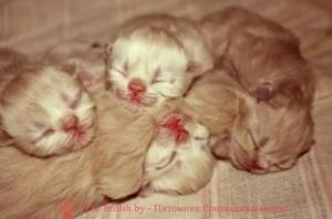новорожденные котята, новорожденный котенок, новорожденный котенок фото, новорождённые котята фото, новорожденные шотландские котята, фото новорожденных вислоухих котят, новорожденные британские котята, новорожденный британский котенок, новорожденные котята британцы, развитие новорожденного котенка, развитие новорожденных котят, yjdjhj;ltyyst rjnznf, yjdjhj;ltyysq rjntyjr, yjdjhj;ltyysq rjntyjr ajnj, yjdjhj;ltyyst rjnznf ajnj, yjdjhj;ltyyst ijnkfylcrbt rjnznf, ajnj yjdjhj;ltyys[ dbckje[b[ rjnzn, yjdjhj;ltyyst,hbnfycrbt rjnznf, yjdjhj;ltyysq,hbnfycrbq rjntyjr