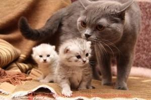 кошка с котятами, молочные зубы у кошек, молочные зубы у котят, у котов есть молочные зубы, когда режутся зубы у котят, когда у котят появляются зубы, как растут зубы у котят, какие зубы меняются у кошек, у кошек растут зубы, передние зубы у кошек, режутся зубы у кота, когда у котят прорезаются зубы, у кошек бывают молочные зубы, у кошки режутся зубы, когда у котят вырастают зубы, прорезывание зубов у котят, вырастают ли зубы у кошек, у котов бывают молочные зубы, котята рождаются с зубами, зубы котенка фото, vjkjxyst pe,s e rjitr, vjkjxyst pe,s e rjnzn, e rjnjd tcnm vjkjxyst pe,s, rjulf ht;encz pe,s e rjnzn, pe,s rjntyrf ajnj