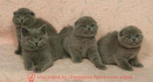 котенок 2 месяца, британский котенок 2 месяца, котёнок 2 месяца фото, котята шотландские 2 месяца, вислоухие котята 2 месяца, котята британцы 2 месяца, вислоухие шотландские котята 2 месяца, британские котята 2 месяца фото, шотландский котенок 2 месяца фото котята британцы фото 2 месяца, черный котенок 2 месяца, размер котенка в 2 месяца, поведение котят в 2 месяца, котята 2 месяца развитие уход сибирские котята 2 месяца фото, как воспитывать котенка 2 месяца, развитие котят по неделям,рост котят по неделям, как определить сколько недель котенку, развитие котенка по неделям фото, как узнать сколько недель котенку, сколько месяцев котенку, котенок до скольки месяцев, развитие котенка по месяцам, размер котят по месяцам, котята от рождения до месяца, взяли котенка 1 месяц, вислоухие котята 1 месяц фото, вислоухие котята 1 месяц фото, rjntyjr 2 vtczwf,,hbnfycrbq rjntyjr 2 vtczwf, rjntyjr 2 vtczwf ajnj, rjnznf ijnkfylcrbt 2 vtczwf, dbckje[bt rjnznf 2 vtczwf, rjnznf,hbnfyws 2 vtczwf