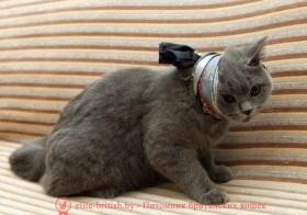 проблемы с зубами у кошек, у кота проблемы с зубами, у кошки налет на зубах, у кота налет на зубах, воспаление зубов у кошек, черные зубы у кота, черный зуб у кота, у кота желтые зубы, желтые зубы у кошки, у кота желтеют зубы, у кота гниют зубы, у кошки гниет зуб, у кота гнилые зубы, у кошки болят зубы, у кота болят зубы, болезни зубов у кошек, заболевания зубов у кошек, больные зубы у кошек, болят ли зубы у кошек, у кота болят зубы симптомы, болят ли у котов зубы, у кошки болят зубы, симптомы, болезни зубов у кошек фото, болезни зубов у кошек, заболевания зубов у кошек, больные зубы у кошек, у кота кровоточат зубы, у кошки чешутся зубы, у котенка чешутся зубы, лечение зубов у котов, камни на зубах у кошек, у кота камни на зубах