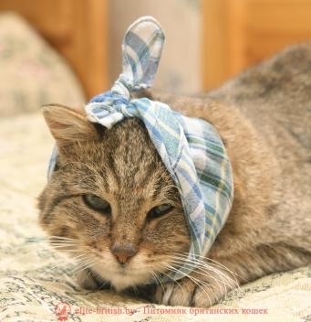 удаление зубов у кошек, коту удалили зубы, удалить зуб у кошки, удаление зуба у кота, кот сломал зуб, кот сломал зуб что делать, кошка сломала зуб, у кота сломался зуб, у кошки сломался зуб, у котенка сломался зуб, вырвать зуб коту, кошке вырвали зуб, кот выбил зуб, кошка выбила зуб, шатается зуб у кошки, у кота шатается зуб, проблемы с зубами у кошек, у кота проблемы с зубами, у кошки налет на зубах, у кота налет на зубах, воспаление зубов у кошек, черные зубы у кота, черный зуб у кота, у кота желтые зубы, желтые зубы у кошки, у кота желтеют зубы, у кота гниют зубы, у кошки гниет зуб, у кота гнилые зубы, у кошки болят зубы, у кота болят зубы, болезни зубов у кошек, заболевания зубов у кошек, больные зубы у кошек, болят ли зубы у кошек, у кота болят зубы симптомы, болят ли у котов зубы, у кошки болят зубы, симптомы, болезни зубов у кошек фото, болезни зубов у кошек, заболевания зубов у кошек, больные зубы у кошек, у кота кровоточат зубы, у кошки чешутся зубы, у котенка чешутся зубы, лечение зубов у котов, камни на зубах у кошек, у кота камни на зубах