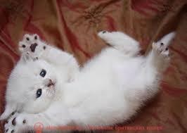 британские котята стоимость британец кот стоимость британец стоимость британская кошка фото стоимость стоимость британских кошек котята британцы стоимость стоимость британских котов сколько стоит котенок британец британский кот сколько стоит сколько стоит британец сколько стоит британская кошка сколько стоит британский котенок цена сколько стоит кот британец сколько стоит голубой британец сколько стоит котенок британский короткошерстный британский кот цена британская кошка цена в беларуси британские котята цена в минске британская голубая кошка фото цена британский короткошерстный кот цена голубой британец цена голубые британцы цена британец цена британская кошка фото цена британские голубые котята цена кот британец голубой цена купить британца котенка цена британец шиншилла фото цена котята британцы фото и цена британец фото цена британские коты фото цена цена британцев котят британский голубой кот цена голубые британские коты цена кот британской породы цена короткошерстный британец цена британская короткошерстная кошка фото цена британские котята цена питомник котята британской породы фото цена кошки британцы цена британец белый цена британские кошки окрасы цена британские кошки цена москва золотые британские котята цена кот британская шиншилла цена котята британской шиншиллы цена кошки британской породы фото цены порода котов британец цена порода кошек британец фото цена британские золотые шиншиллы котята цена британские лиловые котята цена золотой британец цена кот британская шиншилла цена котята британской шиншиллы цена черно белый британский кот британские котята белого окраса британец белый цена британец котенок белый белые британцы котята белые британцы цена кот британец черно белый купить британца в белгороде кот британец фото белый