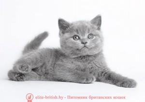 британские котята стоимость британец кот стоимость британец стоимость британская кошка фото стоимость стоимость британских кошек котята британцы стоимость стоимость британских котов сколько стоит котенок британец британский кот сколько стоит сколько стоит британец сколько стоит британская кошка сколько стоит британский котенок цена сколько стоит кот британец сколько стоит голубой британец сколько стоит котенок британский короткошерстный британский кот цена британская кошка цена в беларуси британские котята цена в минске британская голубая кошка фото цена британский короткошерстный кот цена голубой британец цена голубые британцы цена британец цена британская кошка фото цена британские голубые котята цена кот британец голубой цена купить британца котенка цена британец шиншилла фото цена котята британцы фото и цена британец фото цена британские коты фото цена цена британцев котят британский голубой кот цена голубые британские коты цена кот британской породы цена короткошерстный британец цена британская короткошерстная кошка фото цена британские котята цена питомник котята британской породы фото цена кошки британцы цена британец белый цена британские кошки окрасы цена британские кошки цена москва золотые британские котята цена кот британская шиншилла цена котята британской шиншиллы цена кошки британской породы фото цены порода котов британец цена порода кошек британец фото цена британские золотые шиншиллы котята цена британские лиловые котята цена золотой британец цена кот британская шиншилла цена котята британской шиншиллы цена купить котенка британского вислоухого голубого британец с голубыми глазами британец голубой мрамор вислоухие голубые британцы фото кошки голубой британец фото голубой вислоухий британец фото сколько стоит голубой британец фото кошек голубых британцев голубой биколор британец кошка британская голубая вислоухая британская голубая кошка питомник кошки британские голубые купить британская короткошерстная голубая кошка британская голубая кошка уход п