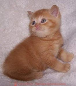 британские котята стоимость британец кот стоимость британец стоимость британская кошка фото стоимость стоимость британских кошек котята британцы стоимость стоимость британских котов сколько стоит котенок британец британский кот сколько стоит сколько стоит британец сколько стоит британская кошка сколько стоит британский котенок цена сколько стоит кот британец сколько стоит голубой британец сколько стоит котенок британский короткошерстный британский кот цена британская кошка цена в беларуси британские котята цена в минске британская голубая кошка фото цена британский короткошерстный кот цена голубой британец цена голубые британцы цена британец цена британская кошка фото цена британские голубые котята цена кот британец голубой цена купить британца котенка цена британец шиншилла фото цена котята британцы фото и цена британец фото цена британские коты фото цена цена британцев котят британский голубой кот цена голубые британские коты цена кот британской породы цена короткошерстный британец цена британская короткошерстная кошка фото цена британские котята цена питомник котята британской породы фото цена кошки британцы цена британец белый цена британские кошки окрасы цена британские кошки цена москва золотые британские котята цена кот британская шиншилла цена котята британской шиншиллы цена кошки британской породы фото цены порода котов британец цена порода кошек британец фото цена британские золотые шиншиллы котята цена британские лиловые котята цена золотой британец цена кот британская шиншилла цена котята британской шиншиллы цена британская короткошерстная кошка рыжая кот британский вислоухий рыжий британский кот рыжего окраса британские котята рыжего окраса рыжий вислоухий британец британец вислоухий рыжий купить британцы рыжего окраса котенок рыжий британец британская красная кошка красный окрас британских кошек британский кот красный красные британские коты британский кот красного окраса красный британец красные британцы красный британец фото фото красных британцев