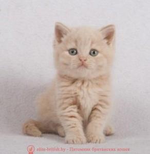 британские котята стоимость британец кот стоимость британец стоимость британская кошка фото стоимость стоимость британских кошек котята британцы стоимость стоимость британских котов сколько стоит котенок британец британский кот сколько стоит сколько стоит британец сколько стоит британская кошка сколько стоит британский котенок цена сколько стоит кот британец сколько стоит голубой британец сколько стоит котенок британский короткошерстный британский кот цена британская кошка цена в беларуси британские котята цена в минске британская голубая кошка фото цена британский короткошерстный кот цена голубой британец цена голубые британцы цена британец цена британская кошка фото цена британские голубые котята цена кот британец голубой цена купить британца котенка цена британец шиншилла фото цена котята британцы фото и цена британец фото цена британские коты фото цена цена британцев котят британский голубой кот цена голубые британские коты цена кот британской породы цена короткошерстный британец цена британская короткошерстная кошка фото цена британские котята цена питомник котята британской породы фото цена кошки британцы цена британец белый цена британские кошки окрасы цена британские кошки цена москва золотые британские котята цена кот британская шиншилла цена котята британской шиншиллы цена кошки британской породы фото цены порода котов британец цена порода кошек британец фото цена британские золотые шиншиллы котята цена британские лиловые котята цена золотой британец цена кот британская шиншилла цена котята британской шиншиллы цена кремовый британский кот британские котята окрас кремовый кот кремовый британец