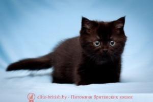 британские котята стоимость британец кот стоимость британец стоимость британская кошка фото стоимость стоимость британских кошек котята британцы стоимость стоимость британских котов сколько стоит котенок британец британский кот сколько стоит сколько стоит британец сколько стоит британская кошка сколько стоит британский котенок цена сколько стоит кот британец сколько стоит голубой британец сколько стоит котенок британский короткошерстный британский кот цена британская кошка цена в беларуси британские котята цена в минске британская голубая кошка фото цена британский короткошерстный кот цена голубой британец цена голубые британцы цена британец цена британская кошка фото цена британские голубые котята цена кот британец голубой цена купить британца котенка цена британец шиншилла фото цена котята британцы фото и цена британец фото цена британские коты фото цена цена британцев котят британский голубой кот цена голубые британские коты цена кот британской породы цена короткошерстный британец цена британская короткошерстная кошка фото цена британские котята цена питомник котята британской породы фото цена кошки британцы цена британец белый цена британские кошки окрасы цена британские кошки цена москва золотые британские котята цена кот британская шиншилла цена котята британской шиншиллы цена кошки британской породы фото цены порода котов британец цена порода кошек британец фото цена британские золотые шиншиллы котята цена британские лиловые котята цена золотой британец цена кот британская шиншилла цена котята британской шиншиллы цена британские котята черный дым британцы коты черные черный британец кот черные британцы купить черный британец купить британец черный дым котята британцы черные купить черно белые британцы купить котенка британца черного черно белый британец британец черный мрамор на серебре британцы черный дым фото британец черный цена британские кошки окрас черный кошка британская черный дым британские кошки черный мрамор британские кошки черного окраса фото бри