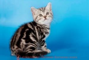 британские котята стоимость британец кот стоимость британец стоимость британская кошка фото стоимость стоимость британских кошек котята британцы стоимость стоимость британских котов сколько стоит котенок британец британский кот сколько стоит сколько стоит британец сколько стоит британская кошка сколько стоит британский котенок цена сколько стоит кот британец сколько стоит голубой британец сколько стоит котенок британский короткошерстный британский кот цена британская кошка цена в беларуси британские котята цена в минске британская голубая кошка фото цена британский короткошерстный кот цена голубой британец цена голубые британцы цена британец цена британская кошка фото цена британские голубые котята цена кот британец голубой цена купить британца котенка цена британец шиншилла фото цена котята британцы фото и цена британец фото цена британские коты фото цена цена британцев котят британский голубой кот цена голубые британские коты цена кот британской породы цена короткошерстный британец цена британская короткошерстная кошка фото цена британские котята цена питомник котята британской породы фото цена кошки британцы цена британец белый цена британские кошки окрасы цена британские кошки цена москва золотые британские котята цена кот британская шиншилла цена котята британской шиншиллы цена кошки британской породы фото цены порода котов британец цена порода кошек британец фото цена британские золотые шиншиллы котята цена британские лиловые котята цена золотой британец цена кот британская шиншилла цена котята британской шиншиллы цена купить мраморного британца британец голубой мрамор британец черный мрамор на серебре британцы мрамор на серебре фото красный мраморный британец британская мраморная кошка мраморный окрас британской кошки британские кошки черный мрамор мраморная британская короткошерстная кошка британские кошки мрамор на серебре британский кот черный мрамор британский кот мрамор на серебре британский мраморный котенок британские котята мрамор британские котята мр