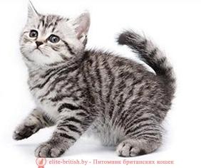 британские котята стоимость британец кот стоимость британец стоимость британская кошка фото стоимость стоимость британских кошек котята британцы стоимость стоимость британских котов сколько стоит котенок британец британский кот сколько стоит сколько стоит британец сколько стоит британская кошка сколько стоит британский котенок цена сколько стоит кот британец сколько стоит голубой британец сколько стоит котенок британский короткошерстный британский кот цена британская кошка цена в беларуси британские котята цена в минске британская голубая кошка фото цена британский короткошерстный кот цена голубой британец цена голубые британцы цена британец цена британская кошка фото цена британские голубые котята цена кот британец голубой цена купить британца котенка цена британец шиншилла фото цена котята британцы фото и цена британец фото цена британские коты фото цена цена британцев котят британский голубой кот цена голубые британские коты цена кот британской породы цена короткошерстный британец цена британская короткошерстная кошка фото цена британские котята цена питомник котята британской породы фото цена кошки британцы цена британец белый цена британские кошки окрасы цена британские кошки цена москва золотые британские котята цена кот британская шиншилла цена котята британской шиншиллы цена кошки британской породы фото цены порода котов британец цена порода кошек британец фото цена британские золотые шиншиллы котята цена британские лиловые котята цена золотой британец цена кот британская шиншилла цена котята британской шиншиллы цена полосатые британские коты полосатые британцы котята британец кот полосатый кошки британцы полосатые британец полосатый купить