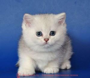 британские котята стоимость британец кот стоимость британец стоимость британская кошка фото стоимость стоимость британских кошек котята британцы стоимость стоимость британских котов сколько стоит котенок британец британский кот сколько стоит сколько стоит британец сколько стоит британская кошка сколько стоит британский котенок цена сколько стоит кот британец сколько стоит голубой британец сколько стоит котенок британский короткошерстный британский кот цена британская кошка цена в беларуси британские котята цена в минске британская голубая кошка фото цена британский короткошерстный кот цена голубой британец цена голубые британцы цена британец цена британская кошка фото цена британские голубые котята цена кот британец голубой цена купить британца котенка цена британец шиншилла фото цена котята британцы фото и цена британец фото цена британские коты фото цена цена британцев котят британский голубой кот цена голубые британские коты цена кот британской породы цена короткошерстный британец цена британская короткошерстная кошка фото цена британские котята цена питомник котята британской породы фото цена кошки британцы цена британец белый цена британские кошки окрасы цена британские кошки цена москва золотые британские котята цена кот британская шиншилла цена котята британской шиншиллы цена кошки британской породы фото цены порода котов британец цена порода кошек британец фото цена британские золотые шиншиллы котята цена британские лиловые котята цена золотой британец цена кот британская шиншилла цена котята британской шиншиллы цена британец черный мрамор на серебре британцы мрамор на серебре фото серебристый британец фото британцы серебристый табби кошки британские серебристые британские кошки серебристая шиншилла британские кошки мрамор на серебре британская кошка серебристый табби британский кот серебристая шиншилла британский кот мрамор на серебре британские серебристые котята котята британские серебристые шиншиллы британские котята мрамор на серебре серебристые британц