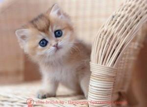 британские котята стоимость британец кот стоимость британец стоимость британская кошка фото стоимость стоимость британских кошек котята британцы стоимость стоимость британских котов сколько стоит котенок британец британский кот сколько стоит сколько стоит британец сколько стоит британская кошка сколько стоит британский котенок цена сколько стоит кот британец сколько стоит голубой британец сколько стоит котенок британский короткошерстный британский кот цена британская кошка цена в беларуси британские котята цена в минске британская голубая кошка фото цена британский короткошерстный кот цена голубой британец цена голубые британцы цена британец цена британская кошка фото цена британские голубые котята цена кот британец голубой цена купить британца котенка цена британец шиншилла фото цена котята британцы фото и цена британец фото цена британские коты фото цена цена британцев котят британский голубой кот цена голубые британские коты цена кот британской породы цена короткошерстный британец цена британская короткошерстная кошка фото цена британские котята цена питомник котята британской породы фото цена кошки британцы цена британец белый цена британские кошки окрасы цена британские кошки цена москва золотые британские котята цена кот британская шиншилла цена котята британской шиншиллы цена кошки британской породы фото цены порода котов британец цена порода кошек британец фото цена британские золотые шиншиллы котята цена британские лиловые котята цена золотой британец цена кот британская шиншилла цена котята британской шиншиллы цена котята британские шиншиллы купить британские котята шиншиллы британец шиншилла фото шиншилла британец британские коты шиншиллы британская кошка шиншилла британская кошка шиншилла фото британские котята серебристая шиншилла купить британский шиншилловый кот фото британцы серебристая шиншилла британец шиншилла фото цена британская кошка золотая шиншилла кошки британской породы шиншилла британская кошка золотая шиншилла фото британский шиншилловый 