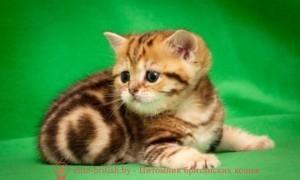 британские котята стоимость британец кот стоимость британец стоимость британская кошка фото стоимость стоимость британских кошек котята британцы стоимость стоимость британских котов сколько стоит котенок британец британский кот сколько стоит сколько стоит британец сколько стоит британская кошка сколько стоит британский котенок цена сколько стоит кот британец сколько стоит голубой британец сколько стоит котенок британский короткошерстный британский кот цена британская кошка цена в беларуси британские котята цена в минске британская голубая кошка фото цена британский короткошерстный кот цена голубой британец цена голубые британцы цена британец цена британская кошка фото цена британские голубые котята цена кот британец голубой цена купить британца котенка цена британец шиншилла фото цена котята британцы фото и цена британец фото цена британские коты фото цена цена британцев котят британский голубой кот цена голубые британские коты цена кот британской породы цена короткошерстный британец цена британская короткошерстная кошка фото цена британские котята цена питомник котята британской породы фото цена кошки британцы цена британец белый цена британские кошки окрасы цена британские кошки цена москва золотые британские котята цена кот британская шиншилла цена котята британской шиншиллы цена кошки британской породы фото цены порода котов британец цена порода кошек британец фото цена британские золотые шиншиллы котята цена британские лиловые котята цена золотой британец цена кот британская шиншилла цена котята британской шиншиллы цена золотой британский кот золотые британцы фото британская кошка золотая шиншилла британская кошка золотая шиншилла фото британский кот шиншилла золотая британские котята золотые шиншиллы купить котята британские окрас золотая шиншилла золотой британец золотой тикированный британец британец золотая шиншилла британец золотистый британец окрас золотая шиншилла фото британская золотая кошка питомник британских золотых кошек британский золотистый кот б
