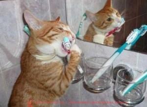 как чистить зубы коту, как чистить зубы кошкам, как почистить зубы коту, как кошке почистить зубы, как чистить зубы котенку, чистка зубов коту, как почистить зубы котенку, чистка зубов у кошек,  уход за зубами кошек, как ухаживать за зубами кошки, чистят ли котам зубы, чистят ли кошкам зубы, можно ли чистить зубы коту, нужно ли чистить зубы кошкам, можно ли кошкам чистить зубы,  надо ли кошкам чистить зубы, ультразвуковая чистка зубов у кошек, как чистить зубы кошке видео