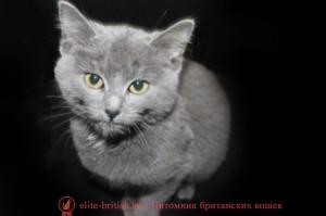британские котята в минске недорого купить британца в минске недорого купить котенка британца недорого британские котята недорого недорогие британские котята куплю британского котенка недорого британские котята без родословной продам британского котенка недорого британские котята без родословной цена британцы недорого купить британца недорого котята британцы недорого британские вислоухие котята недорого британские вислоухие котята купить недорого купить недорого британца вислоухого британские котята дешево продажа британских котят недорого британские котята без документов купить британского котенка без документов купить недорого британца вислоухого