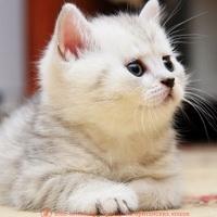 удаление зубов у кошек, коту удалили зубы, удалить зуб у кошки, удаление зуба у кота, кот сломал зуб, кот сломал зуб что делать, кошка сломала зуб, у кота сломался зуб, у кошки сломался зуб, у котенка сломался зуб, вырвать зуб коту, кошке вырвали зуб, кот выбил зуб, кошка выбила зуб, шатается зуб у кошки, у кота шатается зуб