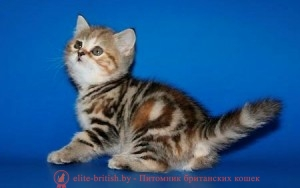 британские котята черепахового окраса фото, черепаховый окрас британской кошки фото, черепаховый британец, британская черепаховая кошка фото, британцы черепахового окраса фото, кошки британские черепахового окраса, черепаховый британский кот, британские коты черепахового окраса, британская черепаховая кошка, британские черепаховые котята, британские котята черепахового окраса, британцы черепаховый окрас, черепаховые британцы фото, британские кошки черепахового окраса, британцы черепахового окраса, британская кошка черепаховый окрас фото, котята британские черепаховый окрас, британец черепахового окраса фото, британские котята черепахового окраса фото, британская кошка черепаший окрас, британский кот черепахового окраса, британский кот мраморный, мраморный британец, мраморный окрас британских котят, британский кот мраморного окраса, мраморный окрас британской кошки, британец мраморного окраса, котята британцы мраморный окрас, мраморный окрас британских котят, серебристый мраморный британец, британская мраморная кошка характер, британский кот мраморного окраса, британец голубой мрамор, британец черный мрамор на серебре, красный мраморный британец, британская мраморная кошка, мраморный окрас британской кошки, британские кошки черный мрамор, мраморная британская короткошерстная кошка, британские кошки мрамор на серебре, британский кот черный мрамор, британский кот мрамор на серебре, британский мраморный котенок, британские котята мрамор, британские котята мрамор на серебре, британский котенок черный мрамор, британец мрамор, британец мрамор на серебре, британец мраморный кот, британец мраморного окраса, черный мраморный британец, черный мрамор британцы, мраморный вислоухий британец, котята британцы мраморный окрас, мраморные британцы котята, британские котята мраморного окраса фото, мраморный британец фото, мраморная британская кошка фото, британские кошки мраморного окраса фото, британские коты мраморные фото, британские котята фото мраморные, британцы мрамор на серебре