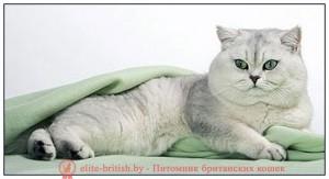 золотой британский кот, золотые британцы фото, золотой британец, британская кошка золотая шиншилла, британский кот шиншилла золотая, золотой тикированный британец, британец золотая шиншилла, британец золотистый, котята британские окрас золотая шиншилла, британская кошка золотая шиншилла фото, британец окрас золотая шиншилла фото, британский золотой котенок, британская золотая кошка, британские котята золотая шиншилла, британский золотистый кот, кот золотой британец, британцы окрас золотой, британцы окрас золотая шиншилла, котята британцы золотая шиншилла, золотистые британские котята, британские котята золотого окраса, британцы золотая шиншилла фото, золотой окрас британских кошек, британцы золотого окраса, британские котята золотого окраса, британец окрас золотая шиншилла, британские котята окраса золотая шиншилла, питомник британских кошек золотых окрасов, британец окрас золотая шиншилла фото, британский кот серебристый, серебристый британец фото, серебристые британцы, британские серебристые котята, затушеванный британец, серебристый затушеванный британец, кошки британские серебристые, британская короткошерстная окраса серебро, британцы серебристая шиншилла, котята британские серебристые шиншиллы, британский кот серебристая шиншилла, британские кошки серебристая шиншилла, британская окрас серебристая шиншилла, британский кот серебристый, серебристый британец фото, серебристые британцы, британские серебристые котята, затушеванный британец, серебристый затушеванный британец, кошки британские серебристые, британская короткошерстная окраса серебро