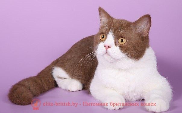 Котята на продажу Kittens for sale  Сайт crownofglory!