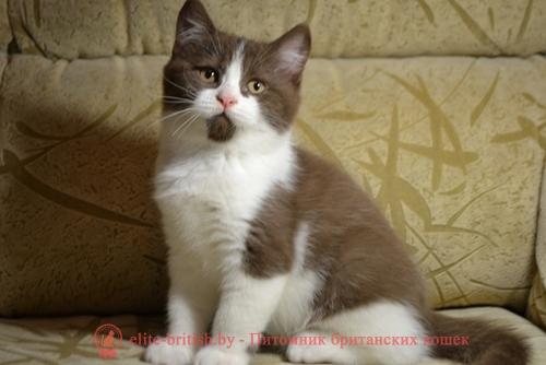 Клички для котов черно белый цвет