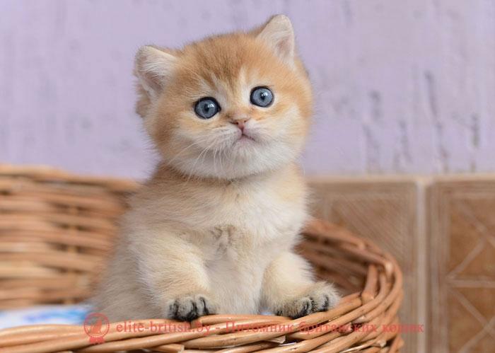 Что значит расцветка кота