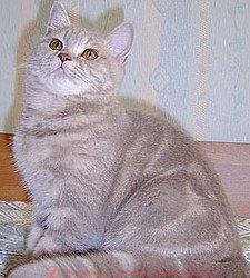 лиловый мраморный