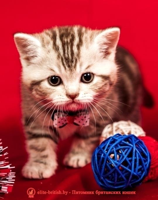 британские котята стоимость британец кот стоимость британец стоимость британская кошка фото стоимость стоимость британских кошек котята британцы стоимость стоимость британских котов сколько стоит котенок британец британский кот сколько стоит сколько стоит британец сколько стоит британская кошка сколько стоит британский котенок цена сколько стоит кот британец сколько стоит голубой британец сколько стоит котенок британский короткошерстный британский кот цена британская кошка цена в беларуси британские котята цена в минске британская голубая кошка фото цена британский короткошерстный кот цена голубой британец цена голубые британцы цена британец цена британская кошка фото цена британские голубые котята цена кот британец голубой цена купить британца котенка цена британец шиншилла фото цена котята британцы фото и цена британец фото цена британские коты фото цена цена британцев котят британский голубой кот цена голубые британские коты цена кот британской породы цена короткошерстный британец цена британская короткошерстная кошка фото цена британские котята цена питомник котята британской породы фото цена кошки британцы цена британец белый цена британские кошки окрасы цена британские кошки цена москва золотые британские котята цена кот британская шиншилла цена котята британской шиншиллы цена кошки британской породы фото цены порода котов британец цена порода кошек британец фото цена британские золотые шиншиллы котята цена британские лиловые котята цена золотой британец цена кот британская шиншилла цена котята британской шиншиллы цена британские вислоухие котята фото лиловые котята британцы лиловые фото британский кот лилового окраса британский вислоухий кот лиловый британские котята лиловые купить британские лиловые котята цена купить лилового британца лиловые британцы котята британцы коты лиловые британцы вислоухие лиловые, шоколадные британцы фото, британские кошки шоколадного окраса фото, британские шоколадные котята фото, шоколадный британец, британские кошки шоколадный 