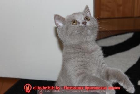 куплю котенка, купить котенка, котята в минске, купить кота, купить кошку, купить в минске котенка, куплю котенка в минске, британская купить, куплю британского котенка, купить британского котенка, продажа котят, британские котята в минске, котята британцы, котенок цена купить, британского котенка в минске, куплю британского котенка в минске, котята в беларуси, продам котят, британские цена, продажа британских котята объявления, объявления котята, британские котята в дар, британские котята в дар, продажа котят в минске, британские котята, котята продажа, продажа британских котят, котята британцы купить, куплю котёнка британца, купить котенка в беларуси, котята купить, недорого котята в минске, недорого купить британскую короткошерстную, породистые котята в дар, породистые котята в минске, британские коты в минске, куплю британского кота, британский кот купить, котята короткошерстные купить, куплю котенка короткошерстного, котята британцы в минске, купить котенка в минске недорого, продажа британских котят в минске, продажа кошек, британские котята цена, британские котята в дар минск, британские котята в минске даром, куплю кошку британскую, котята в дар минск, породистые британские котята недорого, британская короткошерстная купить в минск, купить котенка британца в минске, куплю котенка британца в минске, британские котята в беларуси, где купить котенка британская короткошерстная, котята купить, британские короткошерстные котята купить, куплю британского короткошерстного котенка питомник, цены купить голубого котенка, британский кот цена, котята в белоруссии, купить породистого котенка, куплю породистого котенка, продаю британского, котята купить фото, котята фото цены, продажа котят в беларуси, стоимость котенка, родословная котят, продам британских котят, купить британского котенка недорого, куплю британского котенка недорого, котята бесплатно в минске, купить котенка цены, продаются котята британские короткошерстные, котята в минске британские, котята в минске н