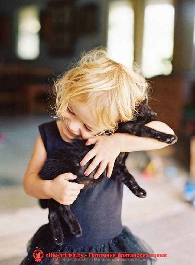 Котенок в подарок, подарить котенка, подарок маме, подарок сестре, подарок девушке, подарок бабушке, подарок на праздник, подарок детям, подарок ребенку